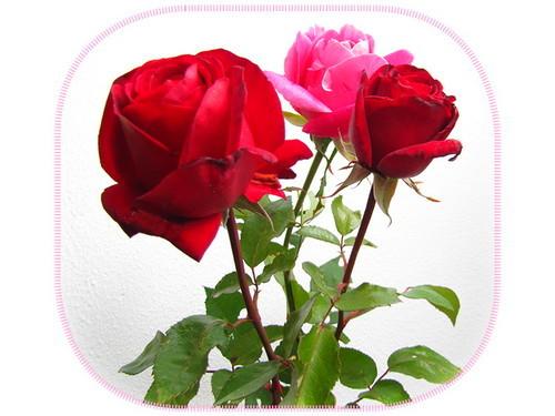 2014-10-14 roza 500